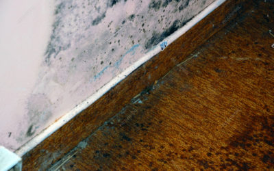 The Difference Between Mildew And Mold – Long Beach Plumbing