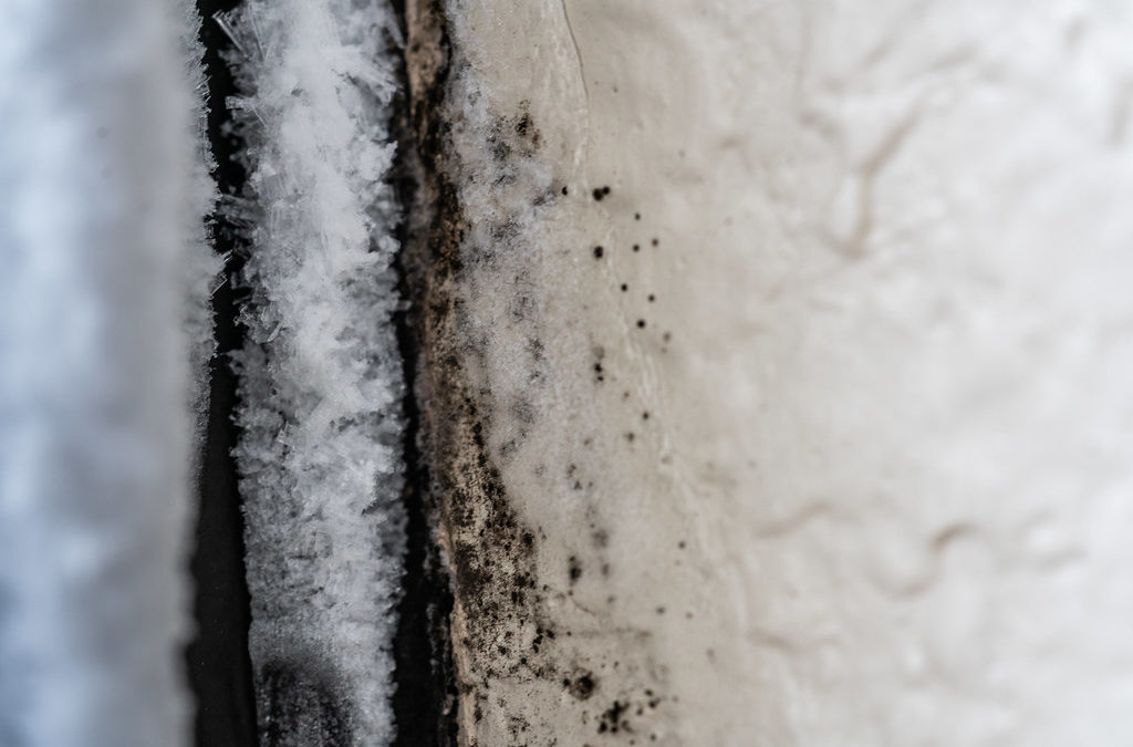 Understanding How Mold Can Grow Anywhere There's Water