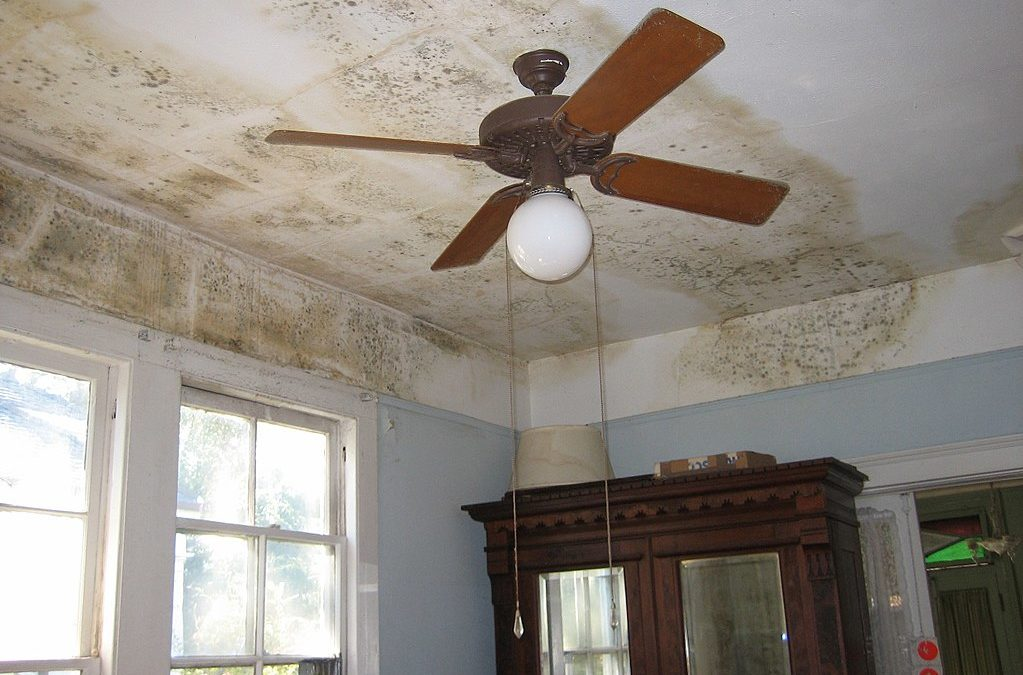 Great Tips On Dealing With Mold And Dampness