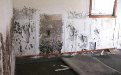 Understanding The Dangers Of Black Mold