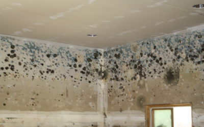 The Proper Way To Identify Mold After A Flood