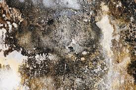 Tips On The Best Way To Identify Mold After A Flood